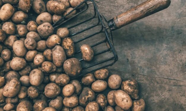 Annual Show to be Cancelled – but Potato Competition to go Ahead